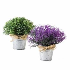 Piantina Lavender